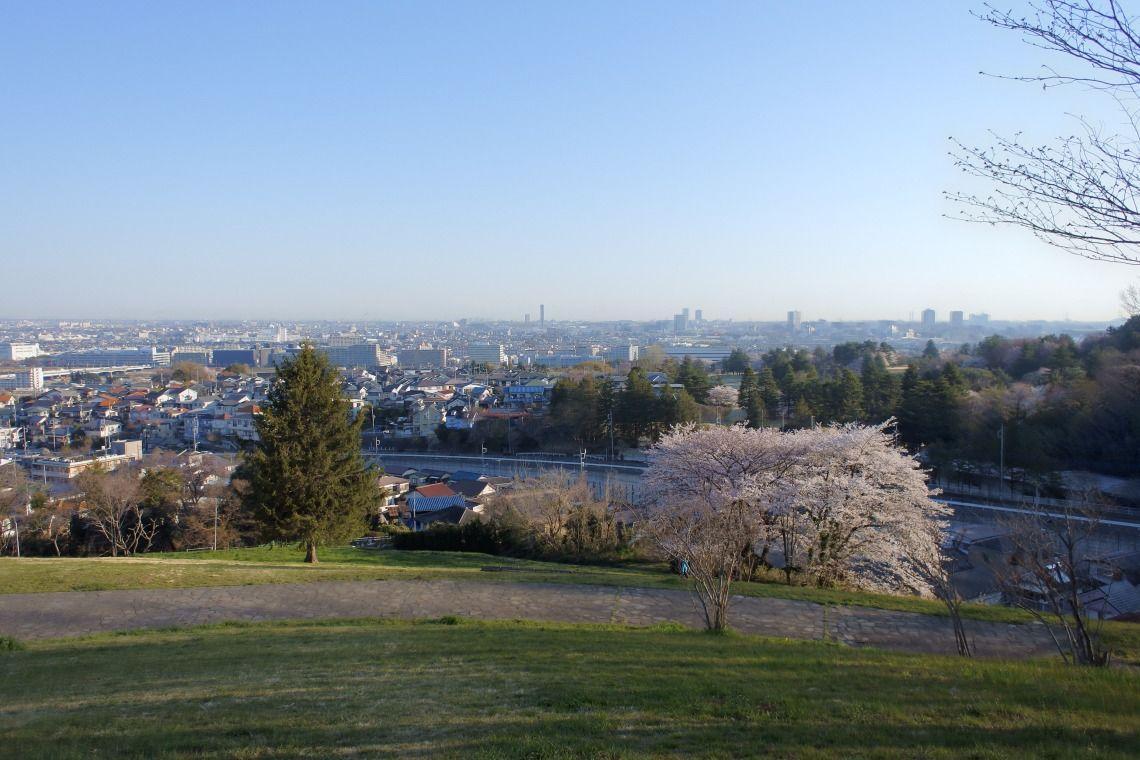 花冷えで桜の満開が遅れています