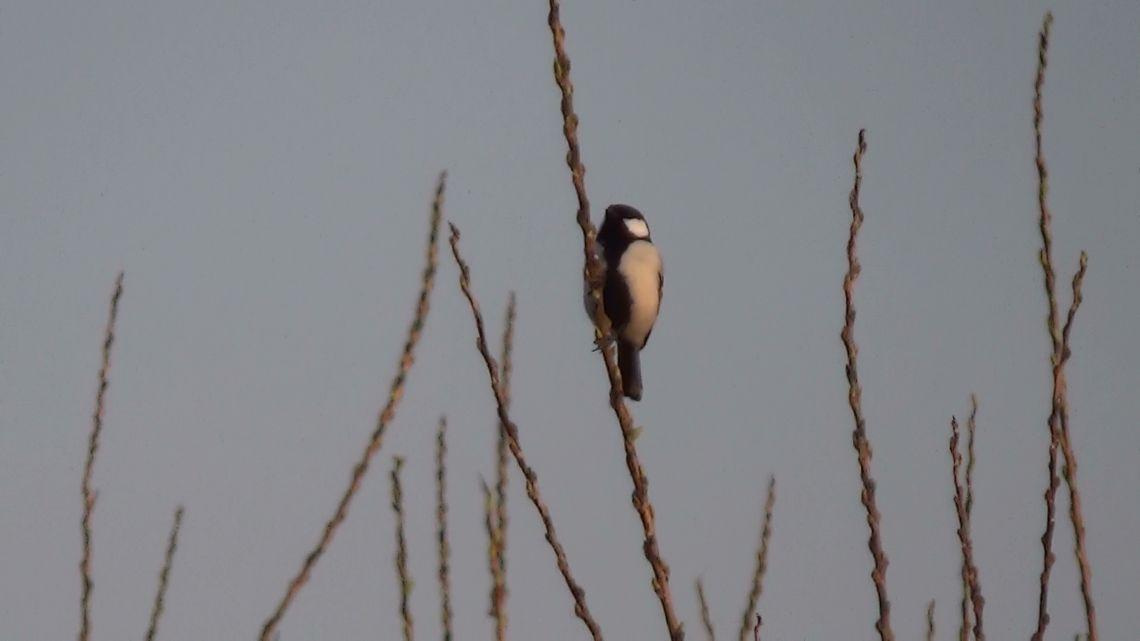 多摩川には小鳥がいっぱい
