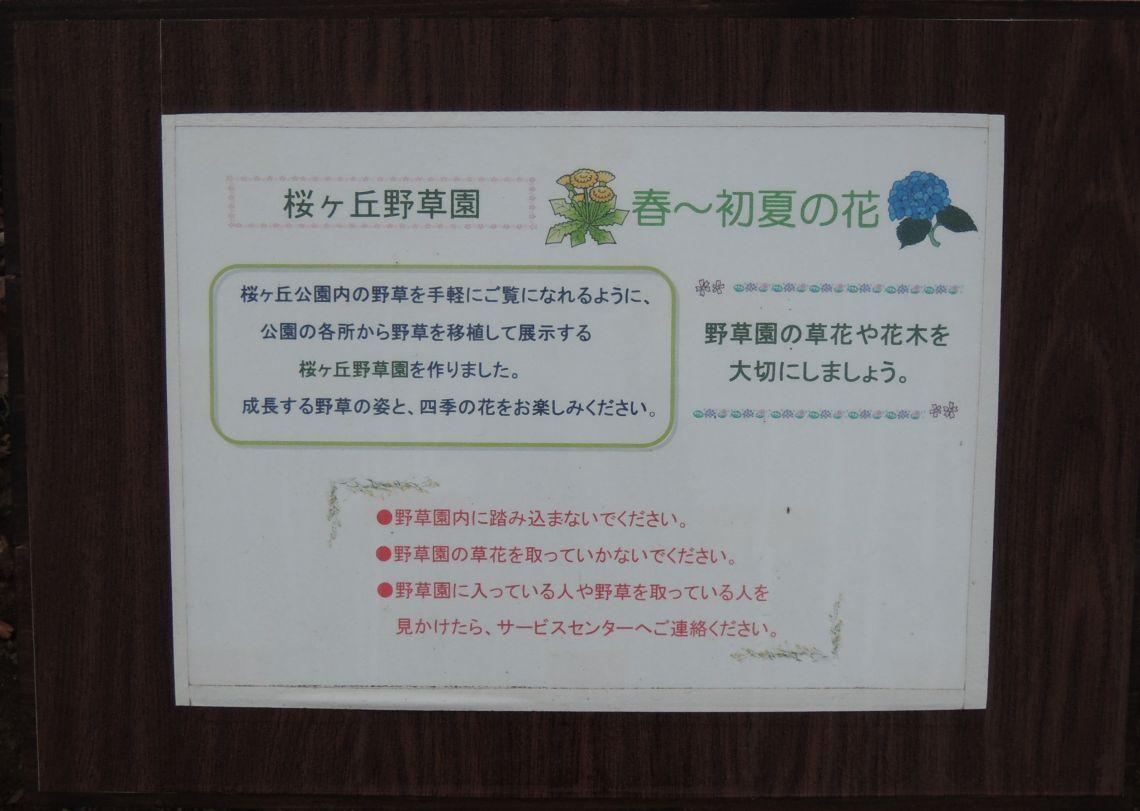 桜ヶ丘野草園