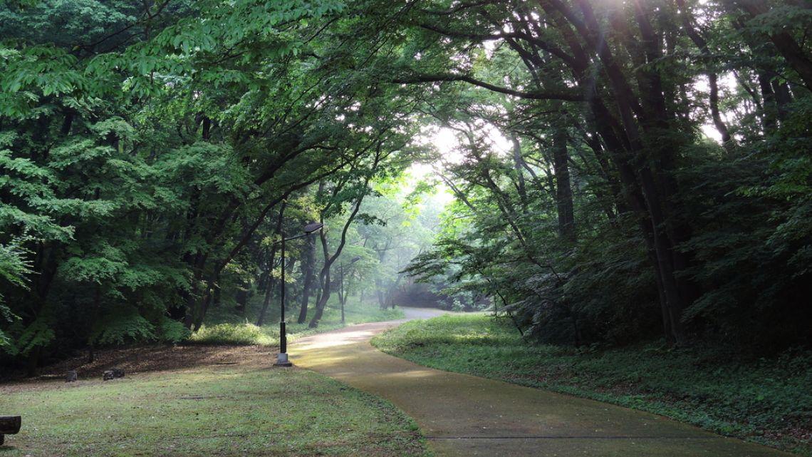 桜ヶ丘公園の探索ルート