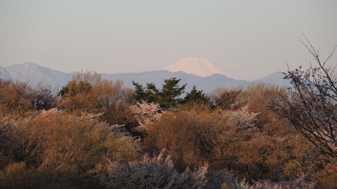 桜ヶ丘公園遊びの広場