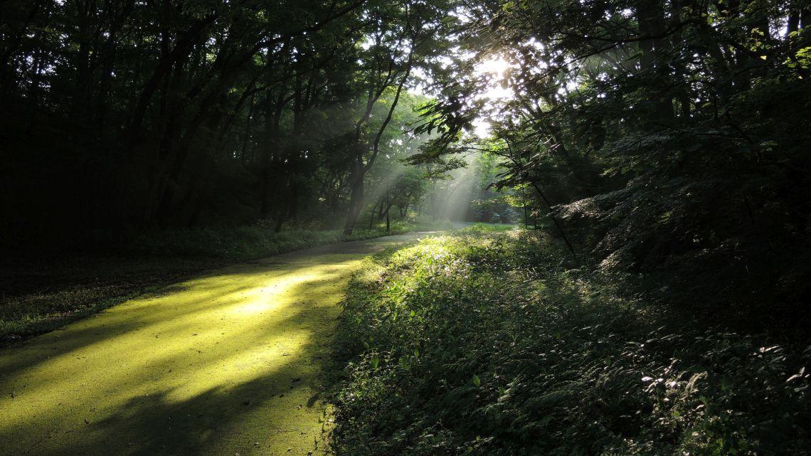 光り輝く道