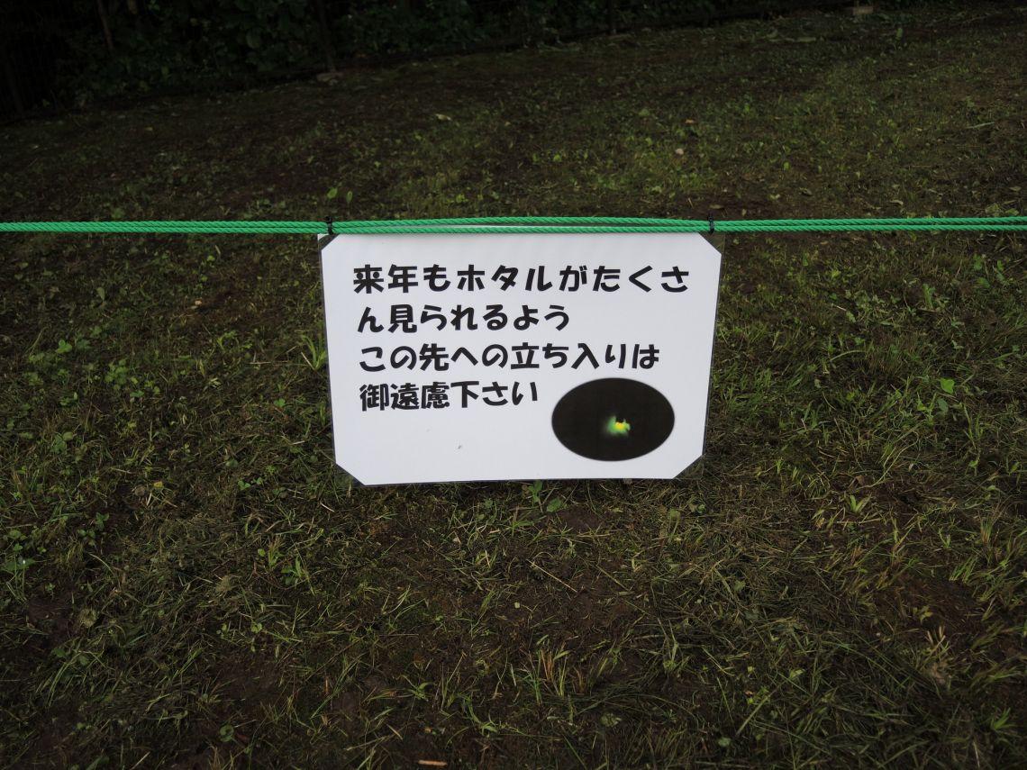 桜ヶ丘公園にホタルがいるの?