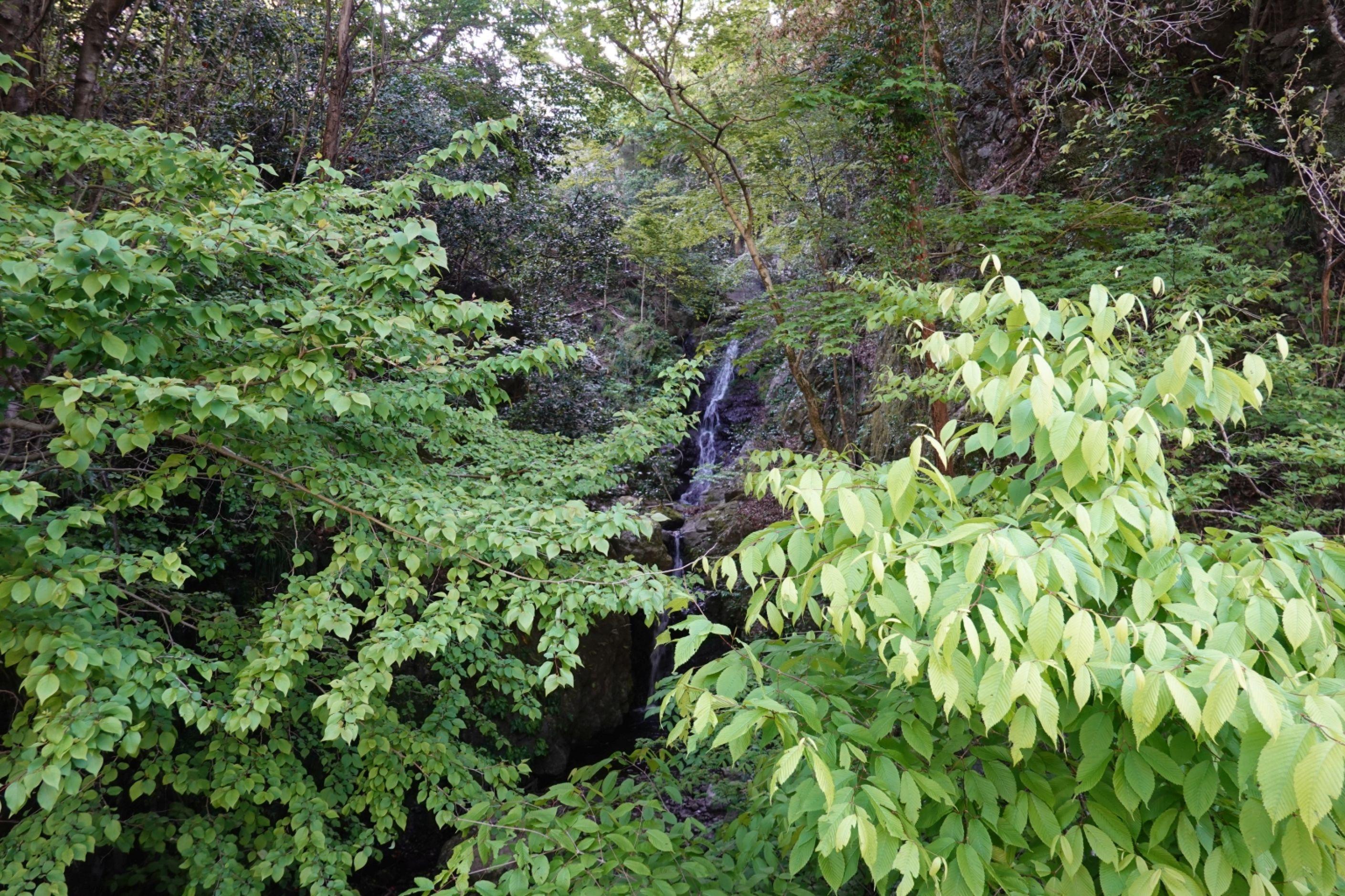 多摩市から檜原村大岳山登山口(千足)までサイクリンク