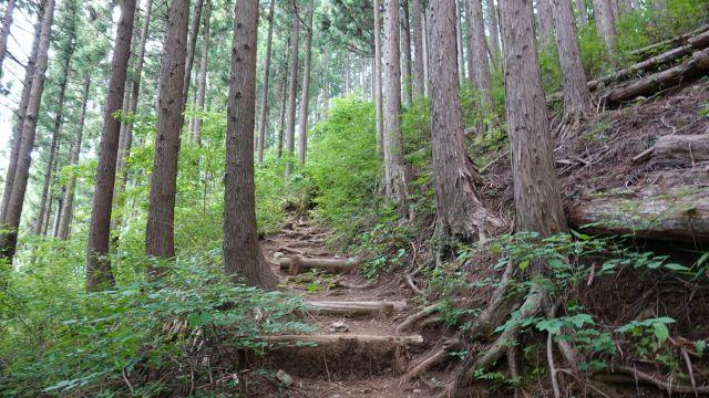 市道山へ登山のため多摩市から林道醍醐線経由で和田峠へサイクリング
