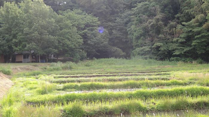 連光寺の谷戸田