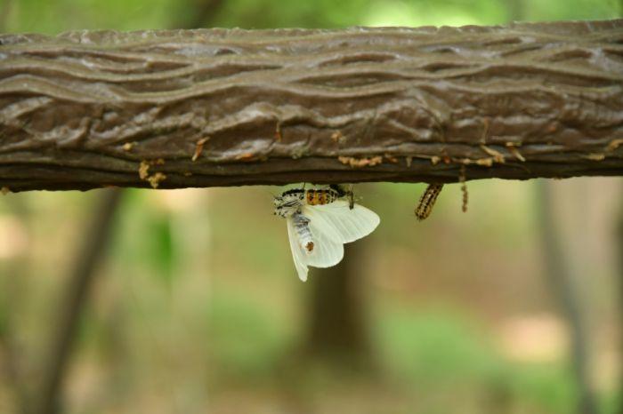 毛虫が蛾に変体