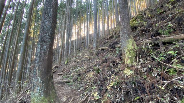 木々の密度の高い