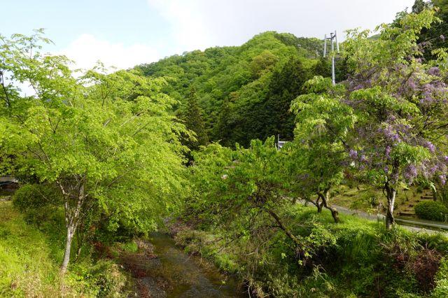 川の緑がまぶしい