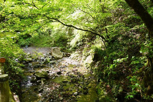 緑が深い盆堀川