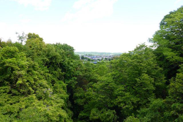 弁天橋からの景色