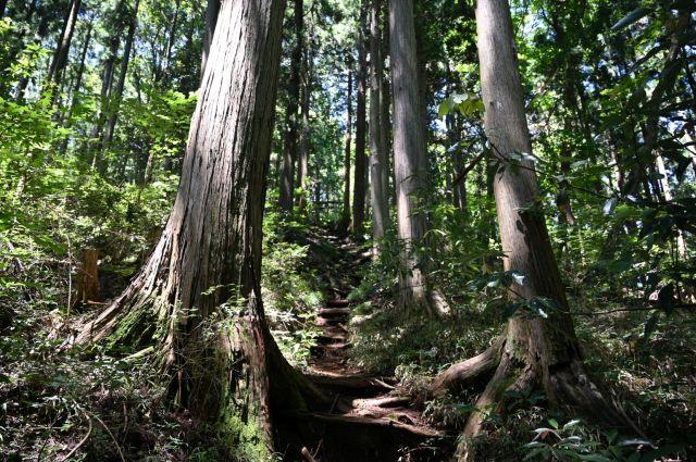山の神社の参道