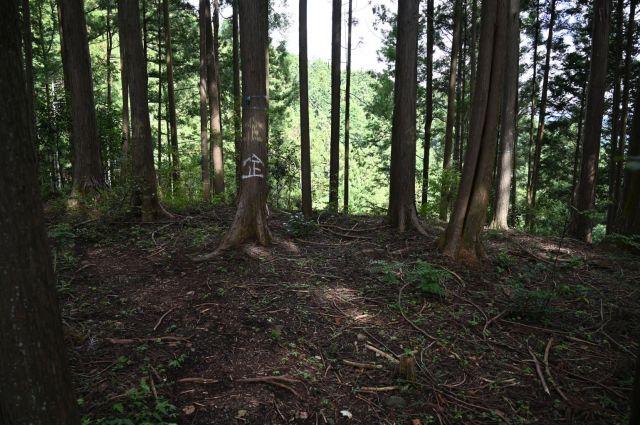 木にスプレー