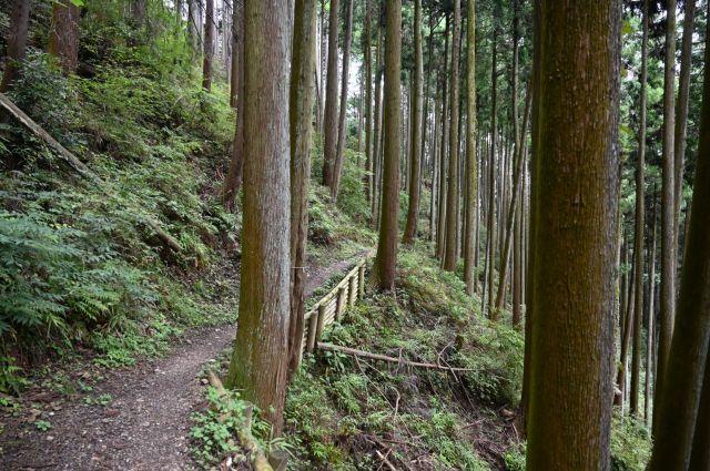 きれいな登山道