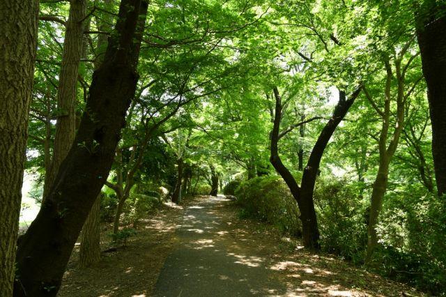 記念館へ行く通りは緑が濃くなりました